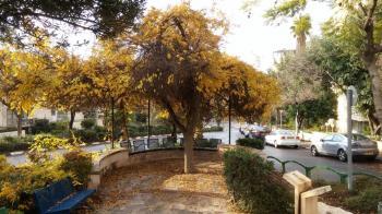 גן ישעיהו ברלין - ירושלים