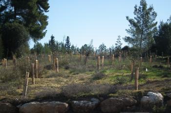 קו המים החמישי לירושלים- שיקום נופי